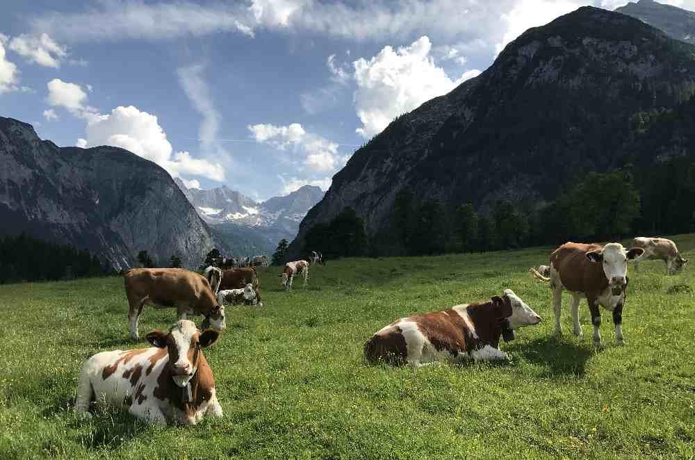 Im Karwendel wandern - bei den Hütten und Almen, ohne die Massen an Menschen. Das mag ich gerne.