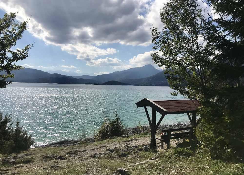Im Walchensee schwimmen zwischen Sachenbach und Urfeld