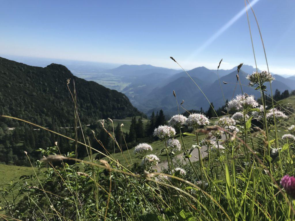 Die Herzogstand Wanderung im Sommer mit Bergblumen